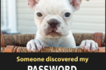 "Photo of a dog, caption: ""Someone discovered my password. Now I have to rename my dog."""