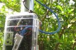 UCSB SmartFarm sensor approximately 5 feet off the ground surrounded by citrus will help UC researchers know when to turn on windfans to protect plants from frost.