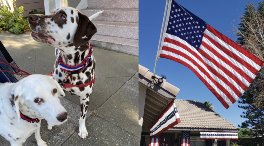 Dogs wearing red, white and blue collars and a house decorated for the 4th of July.