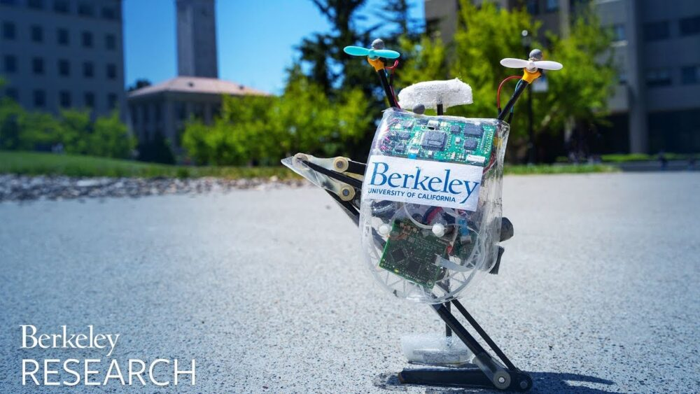 Since first unveiling Salto in 2016, UC Berkeley researchers have upgraded the robot with a host of new abilities. Now, it can navigate an obstacle course with ease and go on walks through Berkeley's campus.