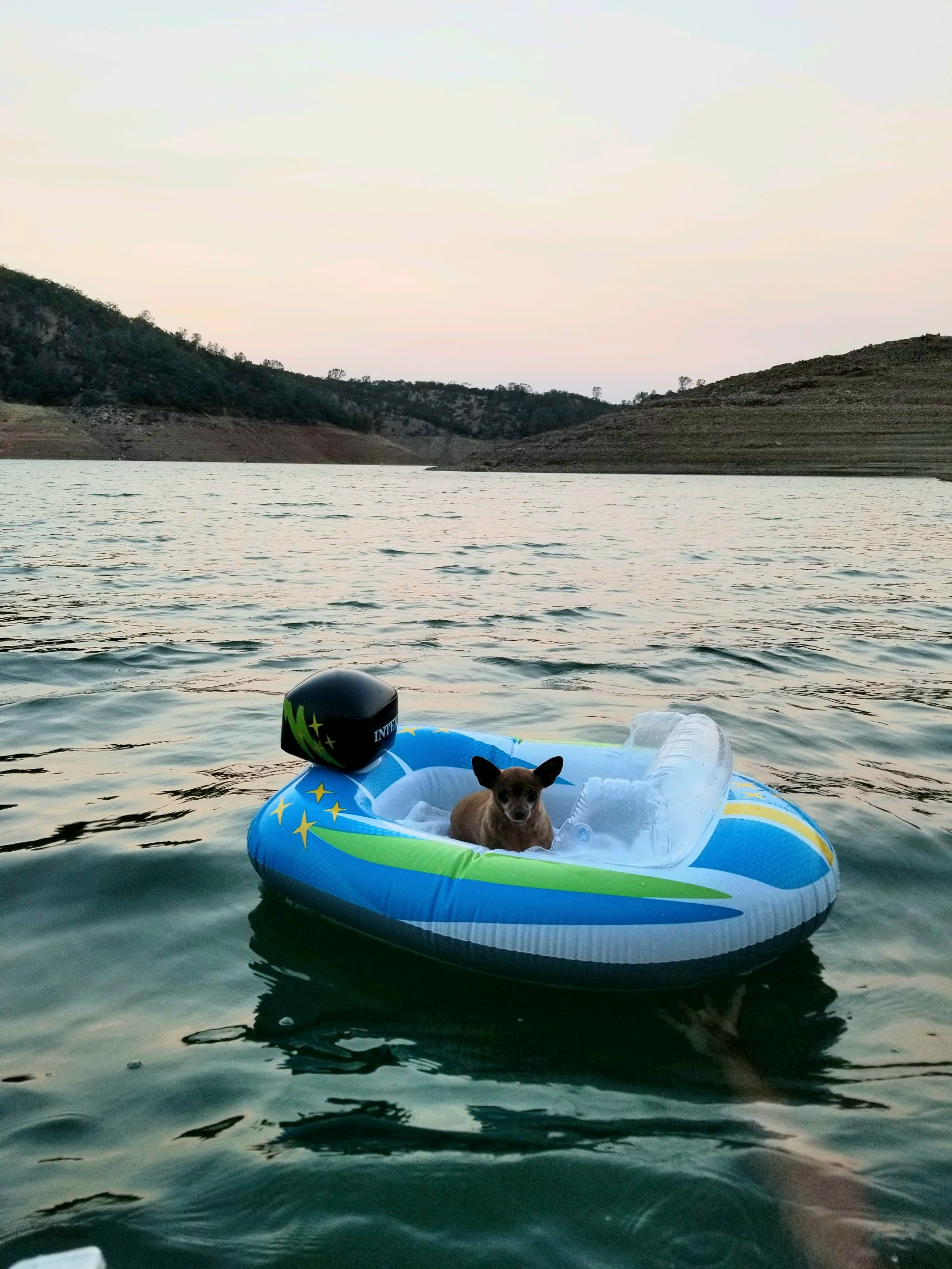 Dog sitting in an inflatable boat on a lake
